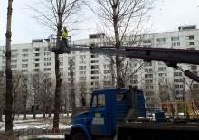 Кронирование деревьев - 3
