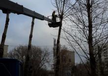 Кронирование деревьев - 2