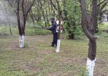 Борьба с вредителями деревьев - 1