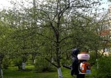 Борьба с вредителями деревьев - 2