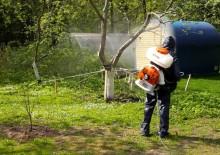 Борьба с вредителями деревьев - 3