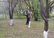 Борьба с вредителями деревьев - 4