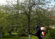 Борьба с вредителями деревьев - 6