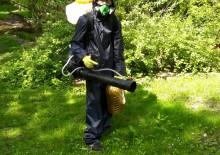Защита деревьев от короеда - 8