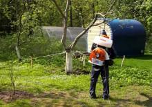 Борьба с вредителями деревьев - 9