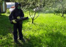 Борьба с вредителями деревьев - 10