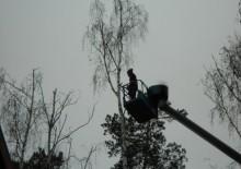 Спилить дерево - 4
