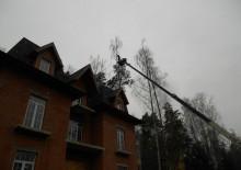 Спилить дерево - 5