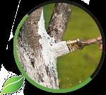 Борьба с вредителями деревьев