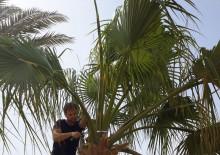 Омолаживающая обрезка деревьев - 4