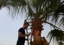 Омолаживающая обрезка деревьев - 5
