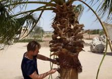 Кронирование деревьев - 6