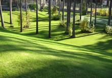 Озеленение участка - 4
