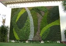 Озеленение участка - 5