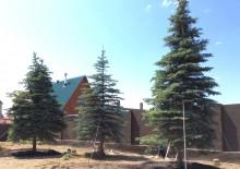 Посадка деревьев на участке - 1