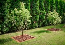 Посадка деревьев на участке - 2