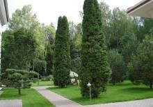 Посадка деревьев на участке - 3