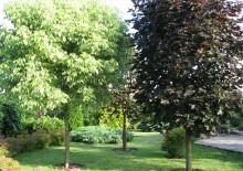Посадка деревьев на участке - 4