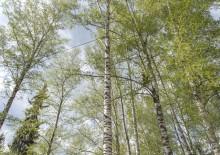 Укрепление деревьев - 2