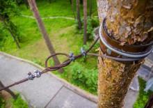 Укрепление деревьев - 1